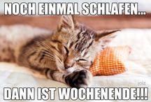 #tgif / Endlich Freitag! Endlich Wochenende! Hier gibt es die schönsten Memes von joiz dazu!