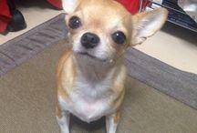 Momo / 愛犬が沢山♡