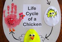 cicli di vita