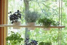 shelf for herbs