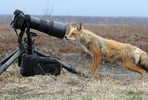Cameranimals / Animals Who simply love DSLR