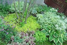 gardenning