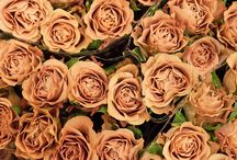 Cappuccino colour them / Cappuccino coloured roses