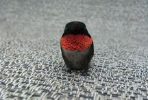Birds / by Maggi Shelbourn