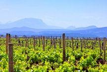 Paysage & Vignes
