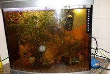 Nancy's aquarium / Het laten zien van mijn aquarium en vissen