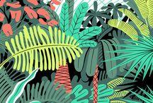 Jungle / Jungle illustration/photos