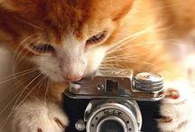 Camera Coolness / by Hula Heather