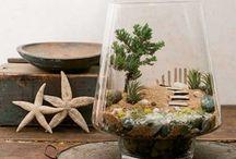 INTERIORS | Cactus terrarium
