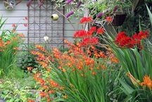 GARDEN INSPIRATION / by Jane Keith