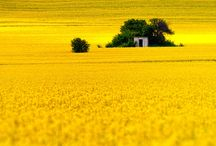 Color My World, Yellow