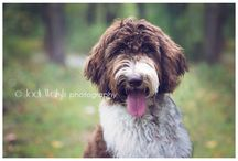 4 legged friends / Photos of the furry family members
