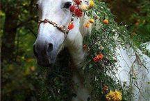 Cavalos / Maravilhosos, corajosos, fiéis, obedientes, belos, singelos, fortes e destemidos...Amo cavalos!