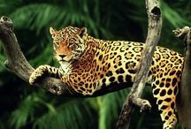 Beauty animals