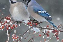 木になる鳥の色