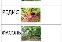 Изучаем мир растений