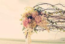 BEACH WEDDINGS / Beach Weddings