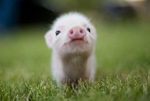 "Cute animals / Adorable animals that you just can't stop looking at and have the arg to say ""Aww"" every time u see them"