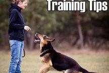 Dogs / Dog tricks and diys