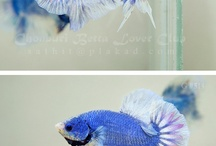 Discus Friends
