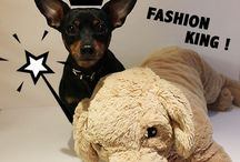 ALL ABOUT PET FASHION/PEPIPETSHOP / pet fashion/pet apparel/pet clothing/fashionable pet dress/