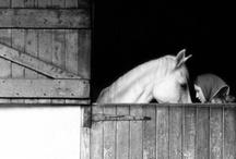 horses / by Meredith Davis