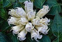 счастье цветочки