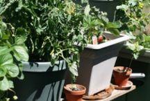 Vegetables Gardens