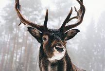 Amazing animals Xx*♡