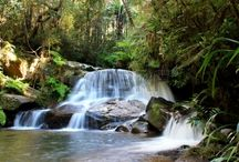 Andasibe / The national park of Mantadia is in the Alaotra Mangoro . It is known for its rare orchids that bloom in the forest, Indri indri that can be observed all year round, its magnificent water falls and the famous cultural rituals of the inhabitants of its surrounding.