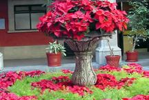 Holiday decor / by K Christy Cubbage