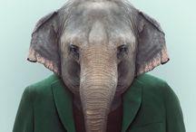 retratos de animales