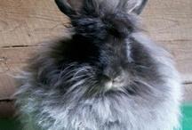 Angora Rabbits / Our favorites pins of angora rabbits.