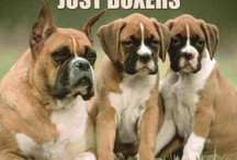 Boxers all a girl needs
