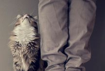 PHOTOGRAPHY | Cats
