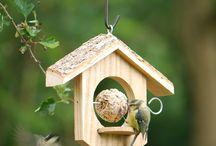 Suet balls & bird feeders