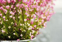 | florals |