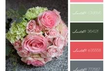 color palettes / by Julia M