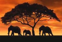Afrika maleri