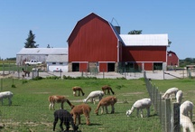 My Dream  Farm / One day I hope to live on a farm with my family.