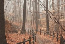 Amazing Autumn | Fabulous Fall / Welcome to the Amazing Autumn | Fabulous Fall board on Jesse's Pinterest! Here, you'll find a range of beautiful photos presenting the glorious season of Autumn, or Fall, if that's what you call it.