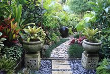 Jardín balines / Plantas tropicales típicas de selva húmeda tropical, selva húmeda y selva
