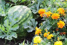 Planter og anden godt