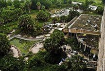 Abandoned Mansions / by Denise Reader Balderama