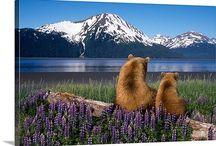 "Alaska Fishing Lodge Slide Shows! / Posted slide shows in our blog - ""Alaska Fishing News"" at www.deniselakelodge.com"
