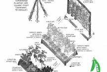 Planten en tuin