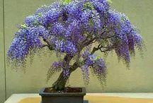 bonsai ideas
