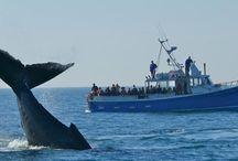 Wale erleben beim Schnorcheln