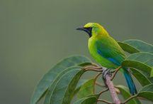 5 Jenis Burung Cucak Ijo Paling Gacor dan Populer di Indonesia