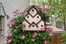 birdhouses & birdbaths / by Janice Johns